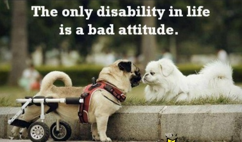"Photo of Dog in a Wheelchair looking in the eyes of another dog with tagline: ""The only disability in life is a bad attitude""."